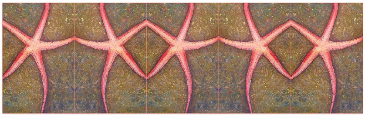 Starfish Pattern by Amy Brown of Mastiff Studios